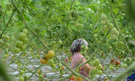 'Tarım sektörü risk altında'