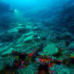Su Altı Dünyasının Göbeklitepesi Antalya'da